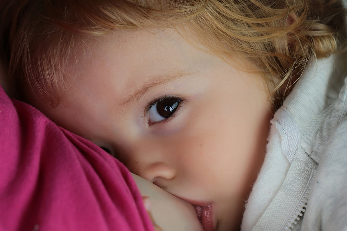 A toddler breastfeeding
